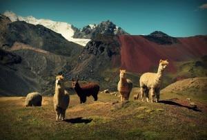 Peru Ausangate 20