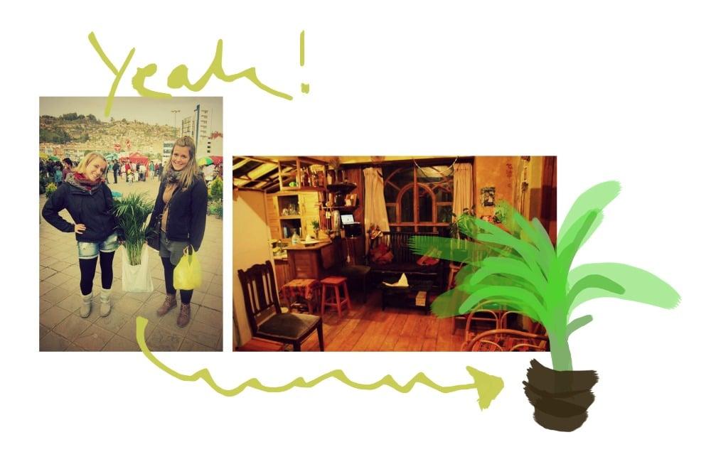pflanzen_fürs_haus_in_cusco_tupac_amaru_design