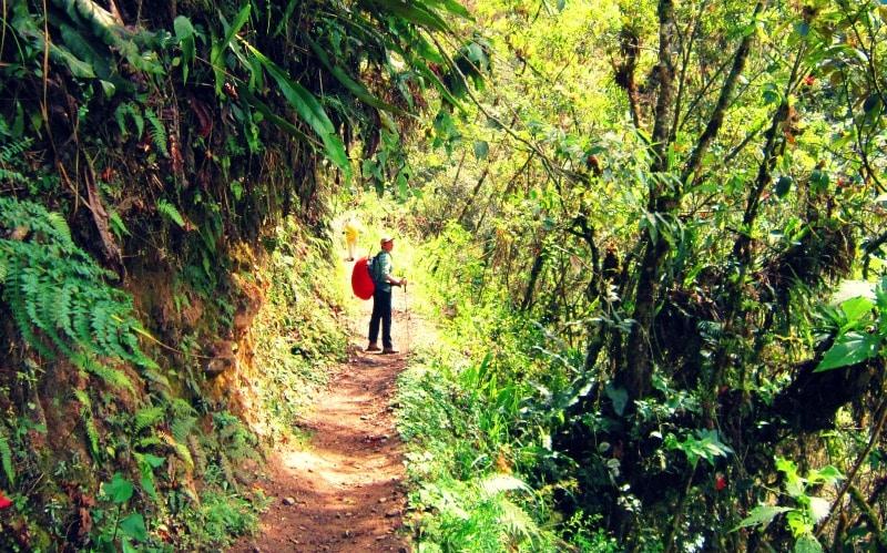 regenwald_peru_wanderung_nach_machu_picchu_salkantay_trekking_alternative_inka_trail