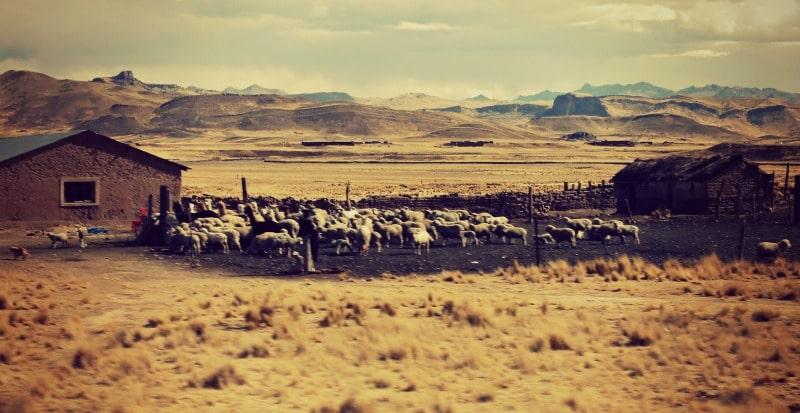 zugfahrt_perurail_juliaca_markt_gleise_andenbahn_andean_explorer_bahnstrecke_puno_cusco_anden_hochland_peru_alpaka_farm