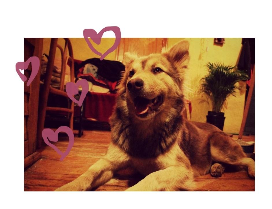 kina_love