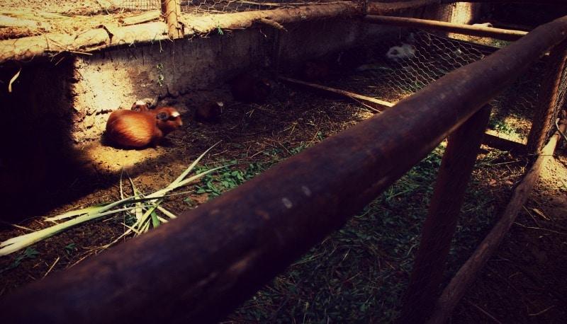 sozialprojekt_kommunaler_tourismus_andenhochland_peru_quechua_indianer_textilien_schafswolle_meerschwein_farm