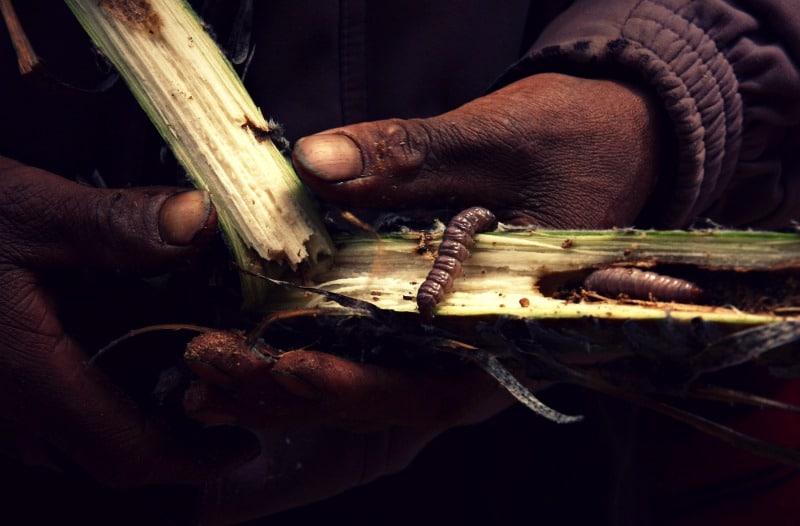 sozialprojekt_kommunaler_tourismus_andenhochland_peru_quechua_indianer_textilien_schafswolle_pfalnze_raupe