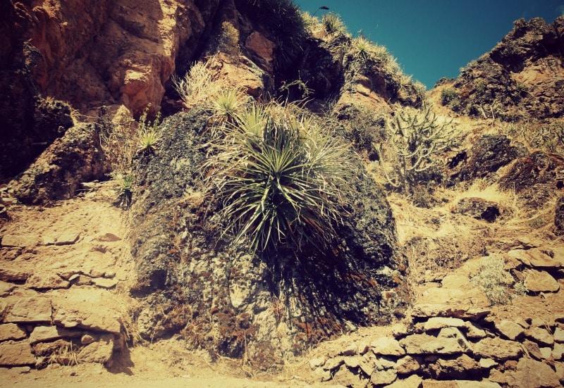 sozialprojekt_kommunaler_tourismus_andenhochland_peru_quechua_indianer_textilien_schafswolle_pflanze