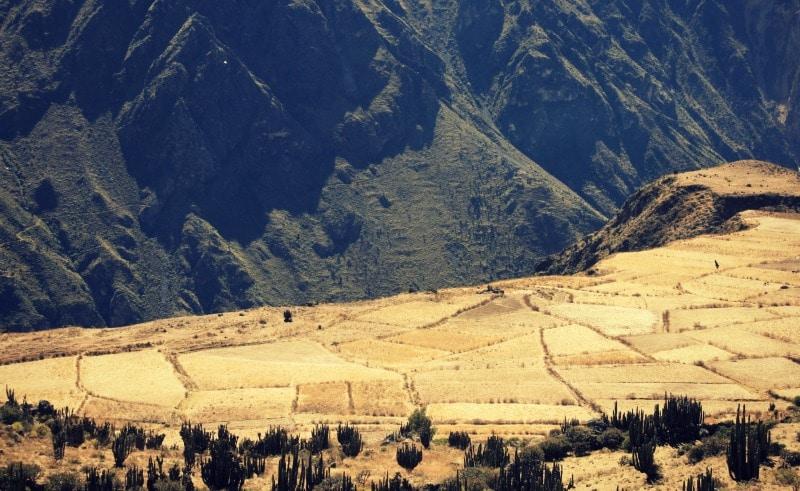 tour_colca_canyon_arequipa_vulkanstadt_hoher_pass_altiplano_peru_tal_chivay_berge_anden_felder