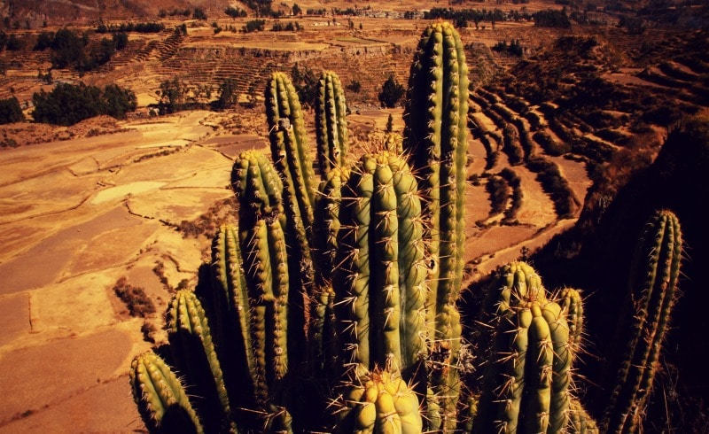 tour_colca_canyon_arequipa_vulkanstadt_hoher_pass_altiplano_peru_tal_chivay_berge_anden_san_pedro_kaktus