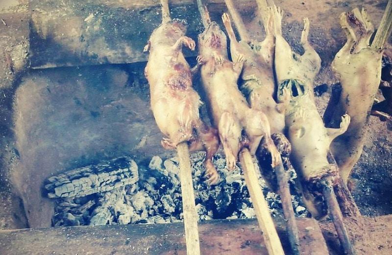 meerschwein_cuy_peru_cusco_reisen_essen_speisen Kopie