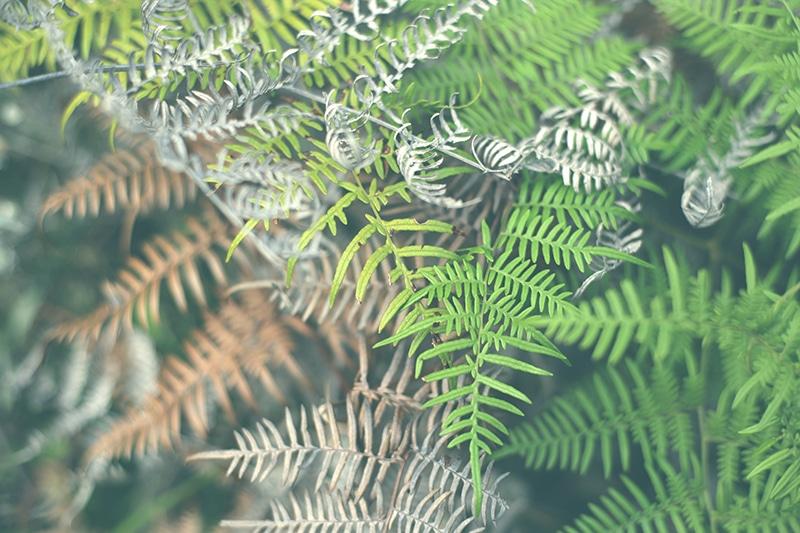 revash_peru_gräber_chullpas_norden_reisen_wanderung_trekking_leymebamba_chachapoyas_natur_flora_pflanze_200