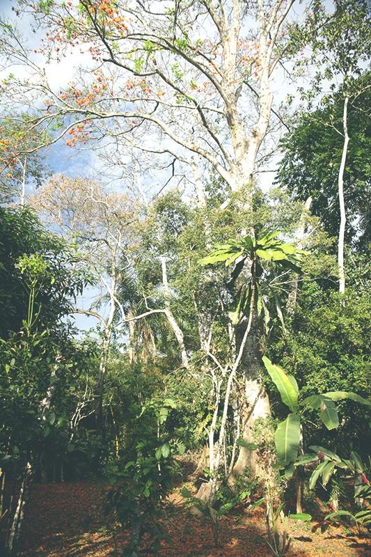 Tarapoto_lodge_los_huingos_unterkunft_peru_norden_regenwald_bäume_garten