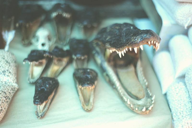 krokodil_peru_iquitos_makrt_belem_belen_dschungel_reisen_200