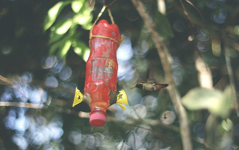 moyobamba_nordperu_colibri_vogel_regenwald_park_orchideen_200