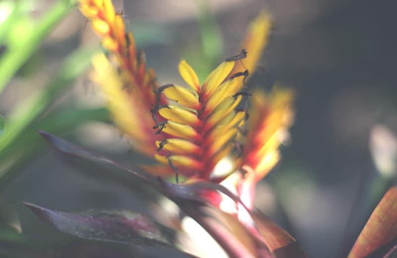 moyobamba_park_orchideen_pflanze_blume_peru_natur_flora_regenwald_norden_peru_200