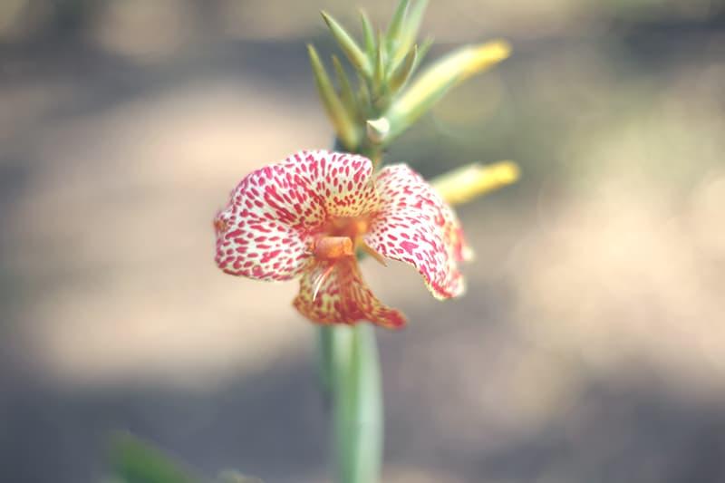 peru_reise_norden_moyobamba_orchideen_park_natur_pflanzen_blume_200