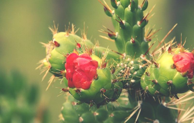 pisac_ruinen_wanderung_trekking_heiliges_tal_der_inka_archäologische_stätte_kaktus