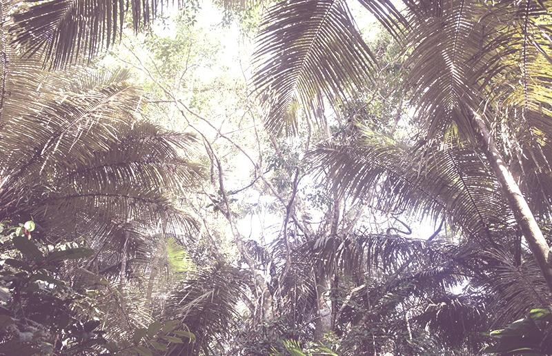 regenwald_amazonas_peru_iquitos_palmen_pflanzen_flora_bäume_urwald_200