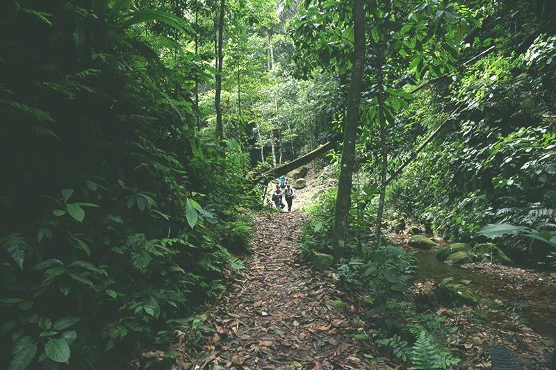 regenwald_norden_von_peru_tarapoto_amazonas_dschungel_grüne_lunge_wanderung_wasserfall
