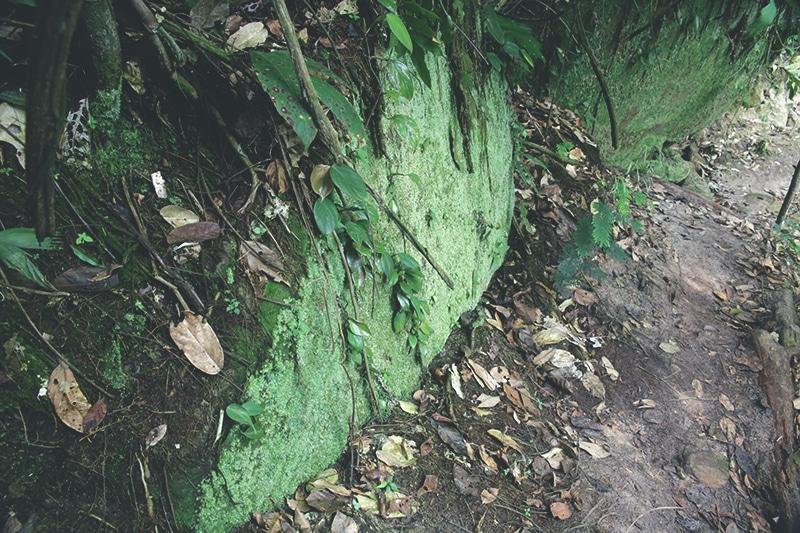 regenwald_urwald_nordperu_wanderung_zum_wasserfall_pucayaquillo_puma_rinri_lodge_reise
