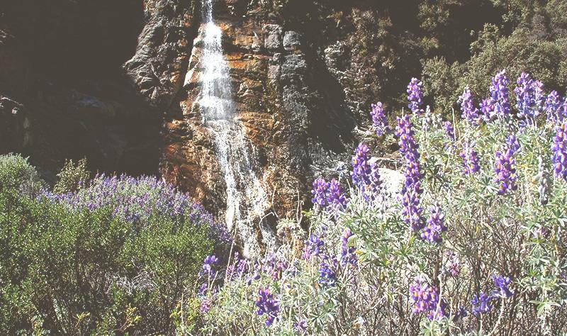 trekking_huaraz_lago_69_wanderung_tour_llanganuco_berge_landschaft_pflanzen_natur