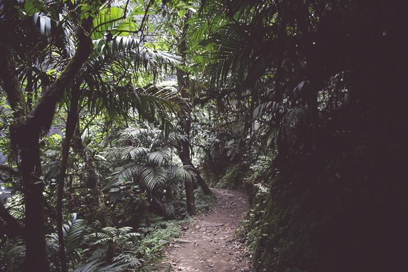 wanderung_trekking_zum_wasserfall_gocta_peru_norden_tour_chachapoyas_reisen_regenwald_pflanzen_bäume