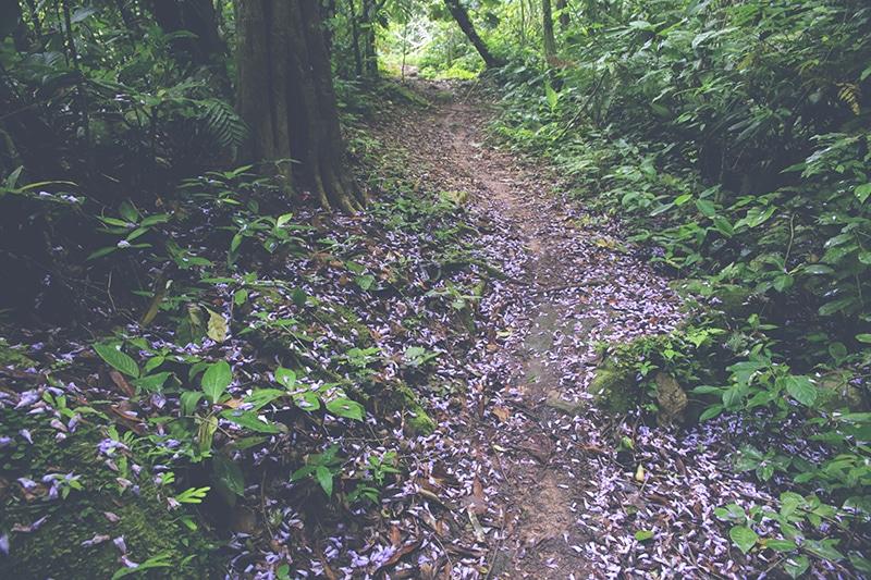 wanderung_wasserfälle_wasserfall_tarapoto_peru_regenwald_dschungel_erlebnis_natur_landschaft_weg_blumen_200