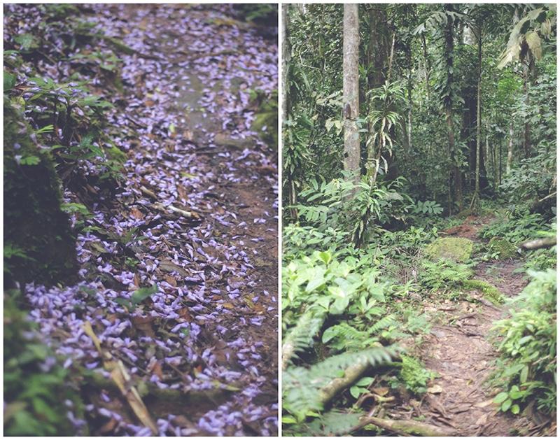 wanderung_wasserfälle_wasserfall_tarapoto_peru_regenwald_dschungel_erlebnis_natur_landschaft_weg_pflanzen_grün_200