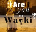 wayki_freund_peru_straßenhund_cusco_san_blas_hunde_südamerika_tiere
