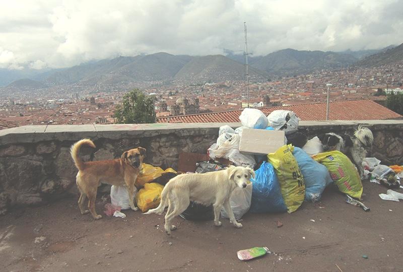 straßenhunde_peru_cusco_hunde_tiere_leben_südamerika_auf_der_straße_anden_menschen