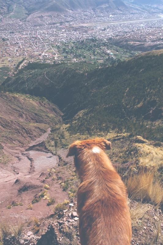 straßenhund_picol_wanderung_cusco_la_rapa_peru_trekking_hunde