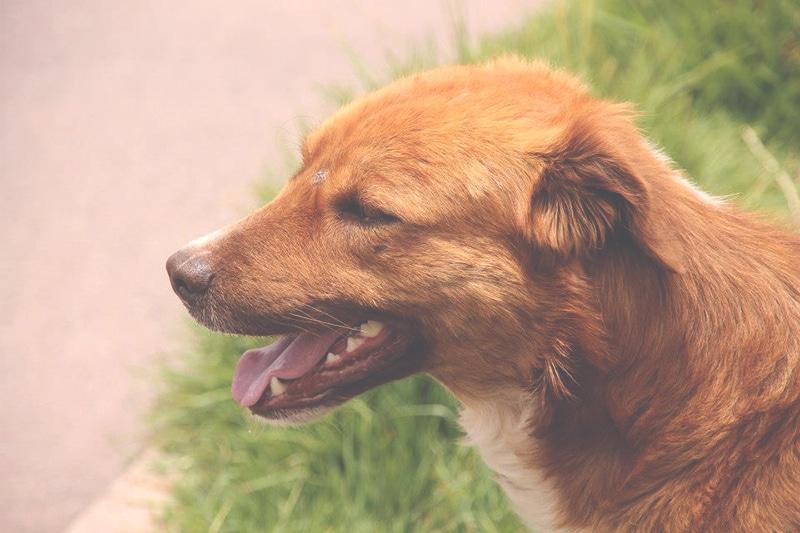straßenhunde_cusco_peru