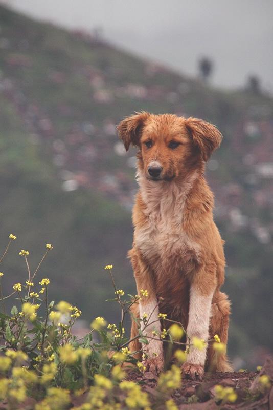 straßenhunde_peru_cusco_hunde_tiere_leben_auf_der_straße_anden_menschen_berge_südamerika