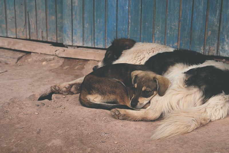 straßenhunde_peru_cusco_hunde_tiere_leben_auf_der_straße_anden_menschen_übernachten