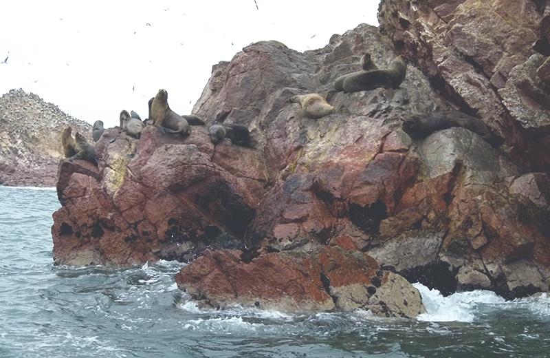 nationalpark_paracas_peru_küste_inseln_islas_ballestas_touren_bus_seelöwen_felsen