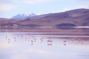 flamingos_salar_de_uyuni_bolivien_salzwu%cc%88ste_jeep_tour_altiplano_chile_san_pedro_de_atacama