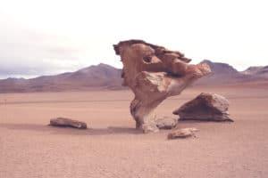 steinbaum_salar_de_uyuni_bolivien_salzwu%cc%88ste_jeep_tour_altiplano_chile_san_pedro_de_atacama