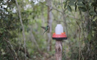 kolibri_moyobamba_peru_rundreise_nordperu_san_martin_touren