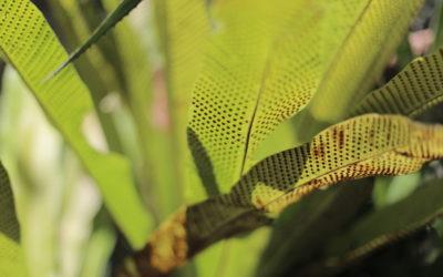 pflanzen_moyobamba_peru_rundreise_nordperu_san_martin_touren