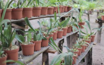 waqanki_orchideen_moyobamba_peru_rundreise_nordperu_san_martin_touren