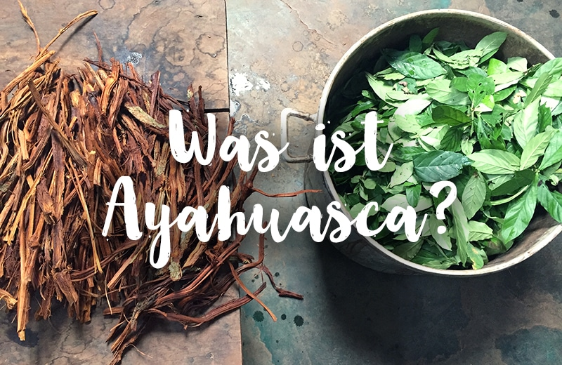 Was ist Ayahuasca? Was du wissen solltest, über die Heilpflanze aus Peru
