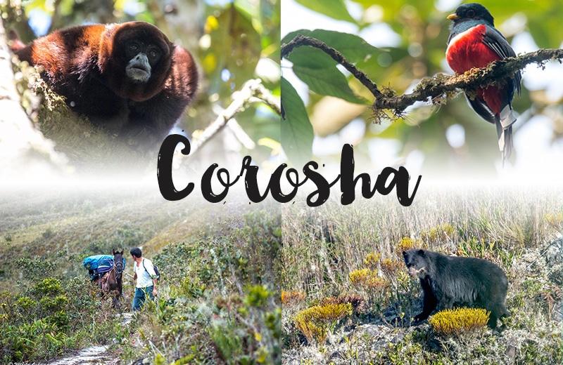 Corosha bei Chachapoyas: Auf der Suche nach Brillenbären, Affen und diversen Vogelarten