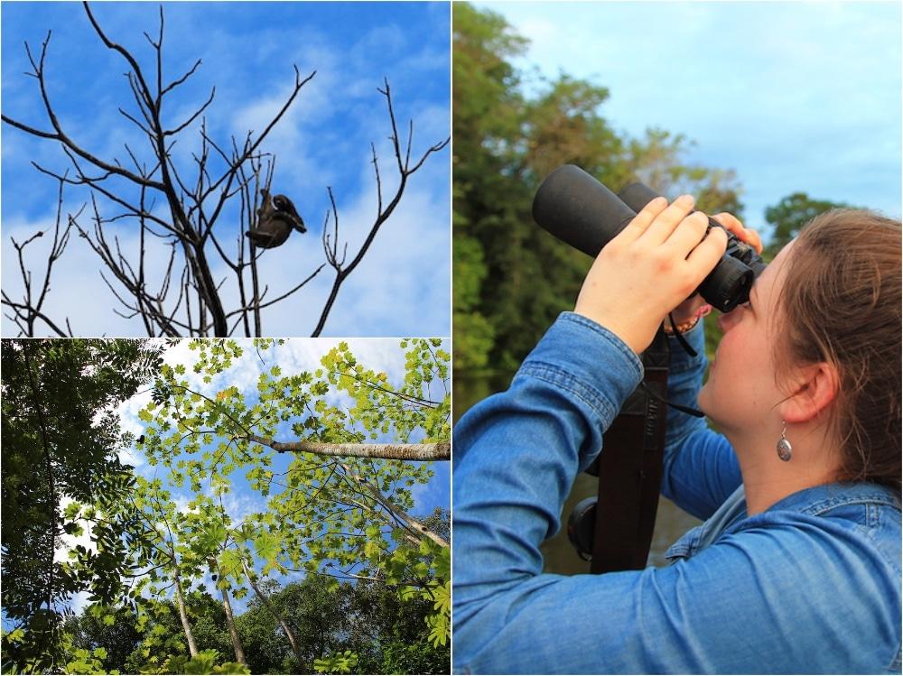 Den Amazonas Regenwald entdecken